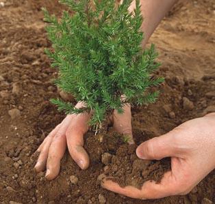 img-tree-planting